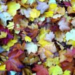 leaves-1776074_1280